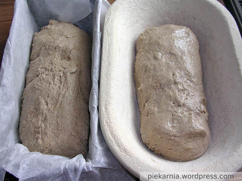 Ciasto chlebowe przed wyrastaniem